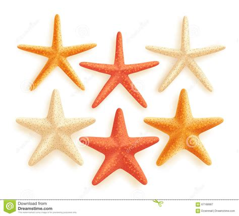 starfish colors 3d realistic set of vector starfish with different colors