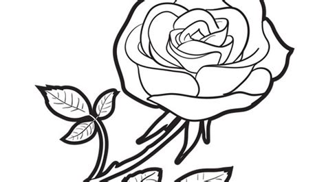 coloring pages of derrick rose rose grandparents com