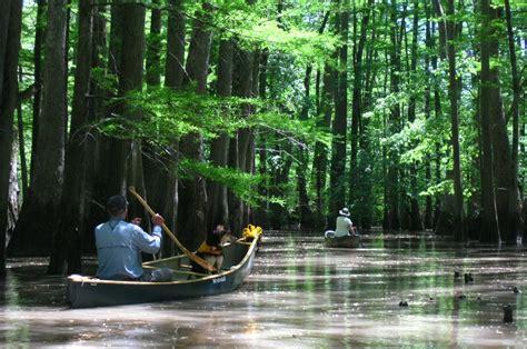 on the bayou canoeing the bayou de view canoe kayak