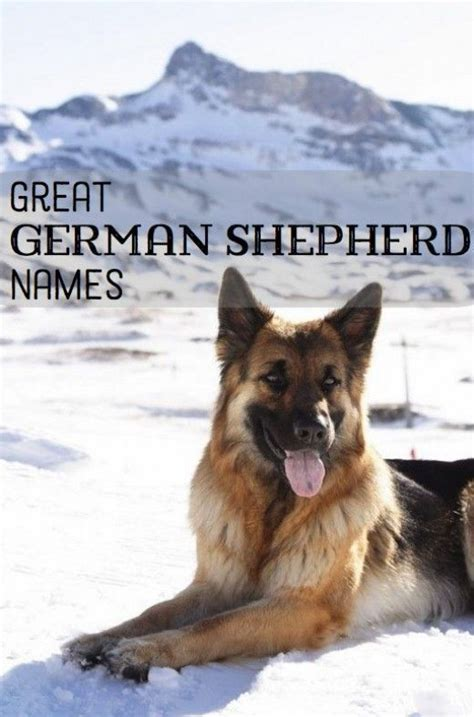 german shepherd puppy names 17 best ideas about german shepherd kennels on german dogs german