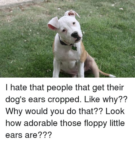 how do their dogs 25 best memes about ear ear memes