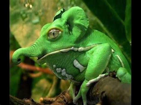 imagenes animales raros reales top 10 animales m 225 s raros del mundo 100 reales youtube