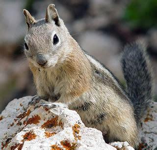 all about squirrels website 1 squirrel info site online