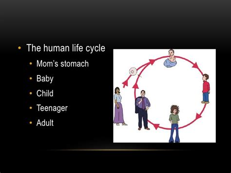 ppt the life cycle of ladybugs powerpoint presentation life cycles ppt