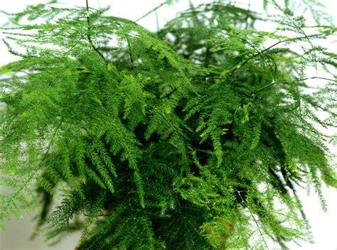 Impressionnant Plante D Interieur Facile D Entretien #4: e4t6hfcf3hcgkk8ogso40kc4o-source-12018896.jpg
