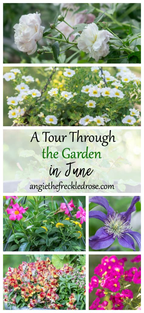 Through The Garden by Dishing It Digging It Link 153 And