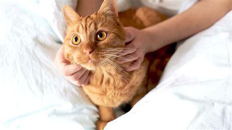 Cat Cat cat care what s new hill s pet