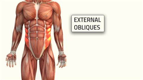 oblique workouts  build  strong  ripped core