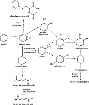 Benzene Detox by Benzene Exposure Assessed By Metabolite Excretion In
