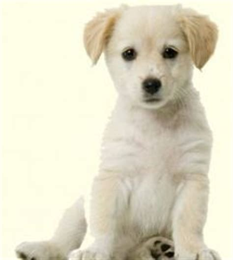free puppies in nj 37 best images about doggies on labrador mix shelters and animal