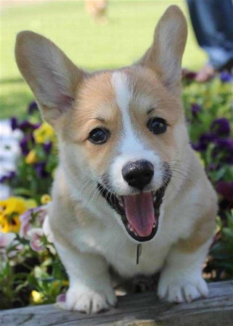 pictures  cute dogs  puppies smiling cute overload babamail