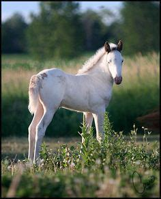 mustang temperament mustangs on mustang horses mustang