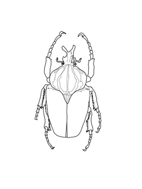 goliath beetle coloring page supercoloringcom