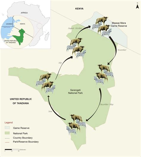 zebra migration pattern serengeti national park karibu world