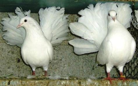 imagenes de tortolas blancas animales