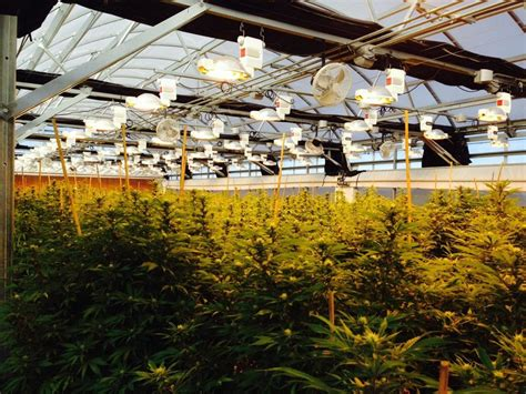 urban green house greenhouse archives cannabis industry journal