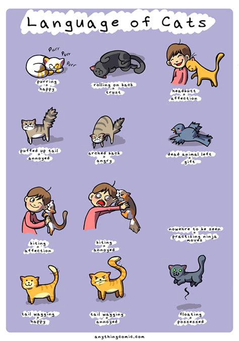 how to live like your cat books 20 comics that perfectly sum up what it s like to live