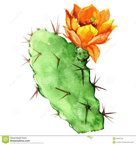 fiori di fichidindia opuntia cactus with yellow flower watercolor stock