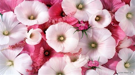 flower wallpaper 1366x768 pictures of beautiful flowers wallpapers wallpaper cave
