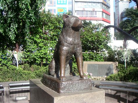 hachi the a tribute to hachiko the who should us true and loyalty topic comic vine