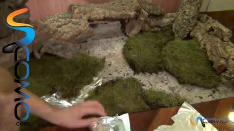 que presentar para cobrar el nacimiento poner el corcho y musgo en el pesebre youtube