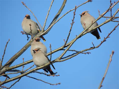 winter birds of new brunswick bird canada