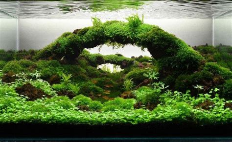 aquascape air laut mini aquascape hobi merawat habitat air