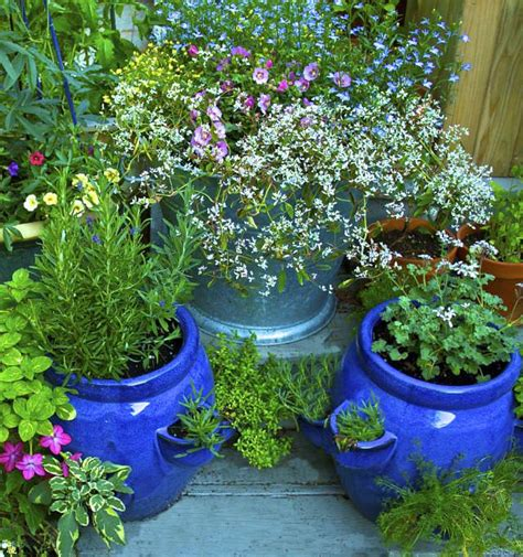 herb garden pest how to keep bugs flowers 5 simple ways balcony