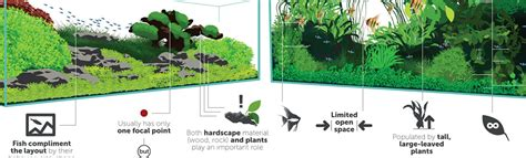 complete guide to aquascaping styles infographic