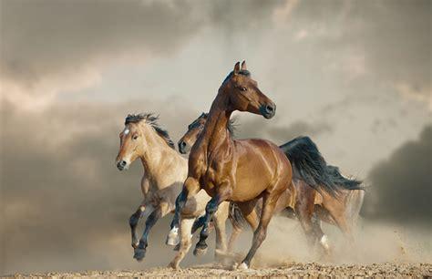 mustang horse animal facts encyclopedia