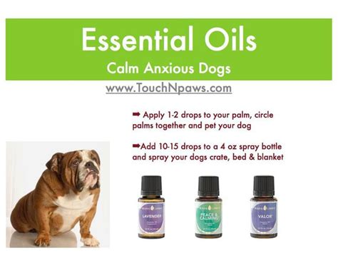 essential oils to calm dogs calm anxious dogs yl essential oils