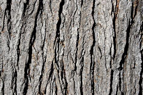 tree bark pin bark texture on