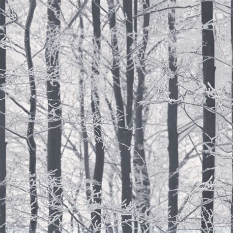 Wallpaper Salur 53cm X 10m 1 arthouse frosted wood glitter black and white silver birch
