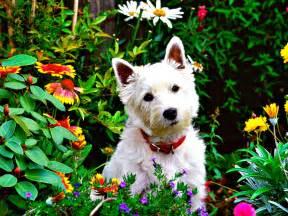 Garden Dogs Gardening 101 With Dogs Conscious Companion