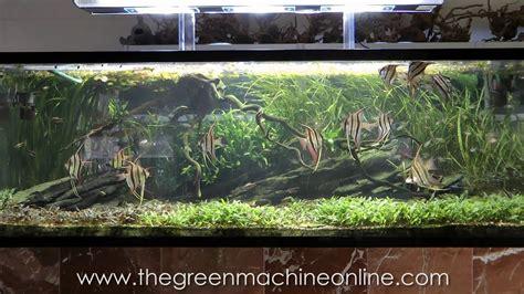 Green Machine Aquascape by Aquascaping Shop Tour Of The Green Machine