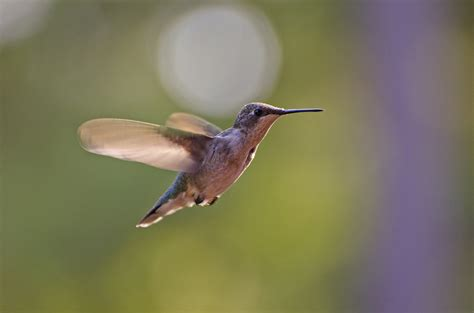 best 28 when do hummingbirds come to where
