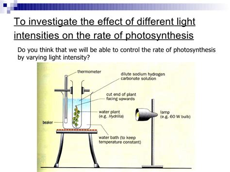 How Does Light Intensity Affect Photosynthesis by Chapter 7 Nutrition In Plants Lesson 3 Experiments