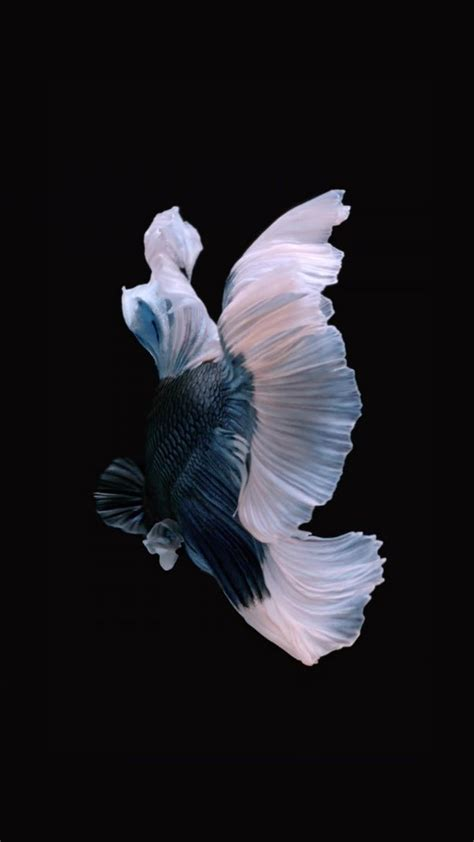 wallpaper iphone 6s hd fish 180 best images about fish on pinterest iphone 6 betta