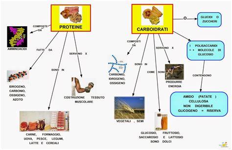 alimenti contengono carboidrati mappa concettuale proteine e carboidrati