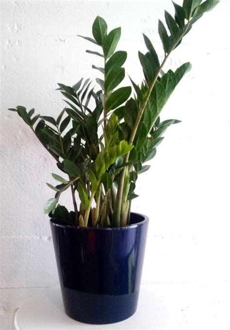 Best Indoor Plants Little Light | what indoor plants need little light interior design