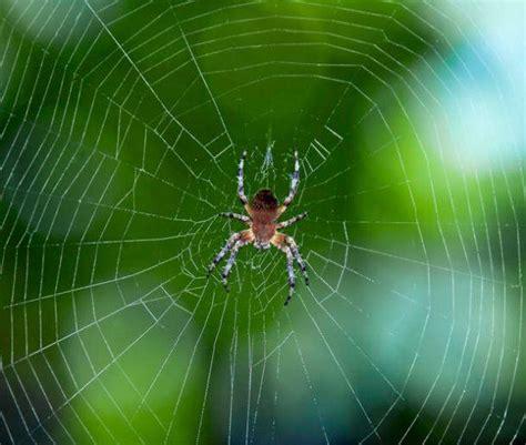 ragni di casa come eliminare le ragnatele in casa