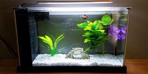 betta tank do betta fish need a filter bettafish org