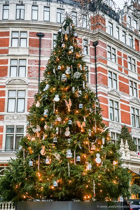 xmas tree hsitory in britain 7 amazing trees in you to see these now
