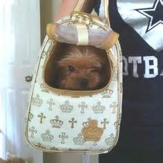 yorkie in a bag 1000 images about yorkies on yorkie teacup yorkie and terrier