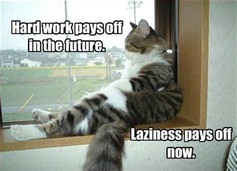 Working Cat Meme - jobs lexis noosa blog page 4