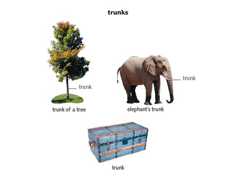 Can The Search The Trunk Of Your Car Without A Warrant Trunk Noun Definition Pictures Pronunciation And Usage Notes Oxford Advanced