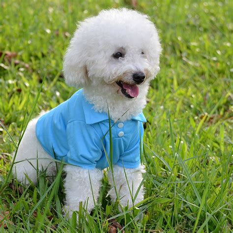 cheap small dogs 2016 cheap clothes 6 colors xs pets clothing summer hoodies for small
