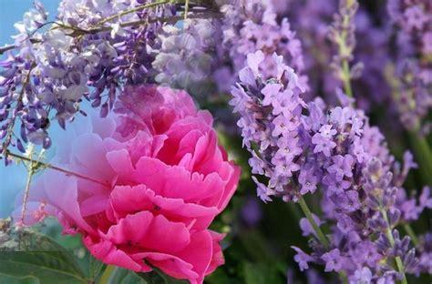 fiori della primavera gli smalti della primavera 2014 puntano sul viola e sul rosa