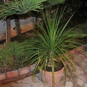 palmier d int 233 rieur liste ooreka
