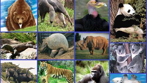 imagenes de animales en extincion 191 qu 233 es un animal en peligro de extincion 187 respuestas tips